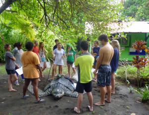Schildkröten-in-Costa-Rica-1